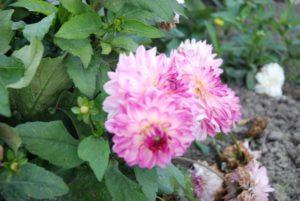De Bloemen test